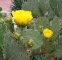 Почему нельзя держать в доме кактусы