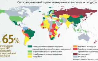 Породы коров молочного направления в России