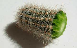 Пожелтел кактус