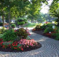 Теневые растения и цветы для сада