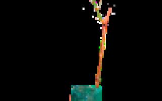 Посадка питомник мелитополь