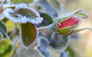 Зоны зимостойкости роз