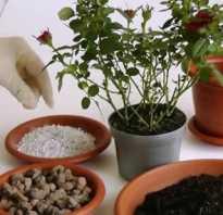 Как правильно пересадить цветок