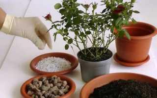 Как пересадить цветы из горшка в горшок