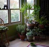 Какие комнатные растения не любят свет
