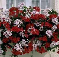 Свисающие цветы для сада