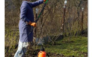Опрыскивание плодовых деревьев осенью бордосской жидкостью