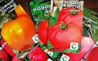 Ранние помидоры для теплицы названия