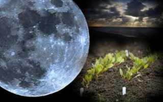 Лунный календарь для комнатных цветов