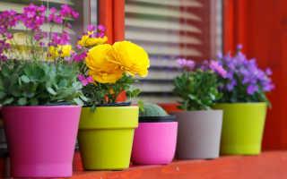 Комнатные цветущие растения