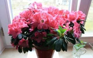 Красивые и неприхотливые комнатные растения