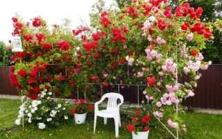 Посадка и уход за розами для начинающих