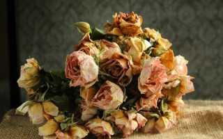 Засохшие розы
