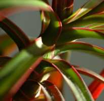 Комнатные растения на букву в