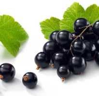 Чем удобрять черную смородину осенью