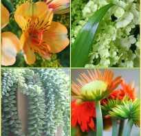 Комнатные цветы названия