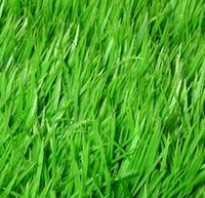 Какую траву посадить в саду между деревьями