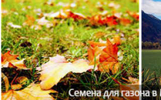 Посадка газонной травы осенью