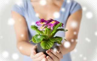 Цветок в подарок в горшке