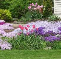 Многолетние газонные цветы