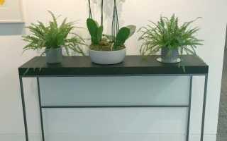 Какие комнатные растения любят солнце