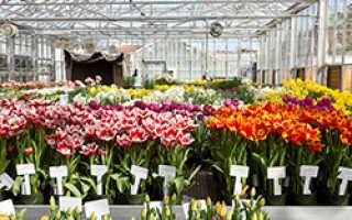 Теплица для тюльпанов