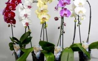 Орхидея из семян