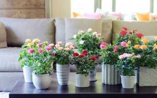 Как посадить розу из букета в домашних
