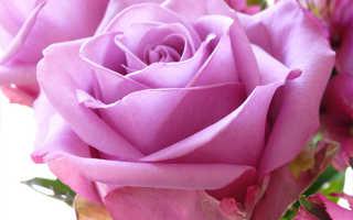 С чем сочетаются розы в букете