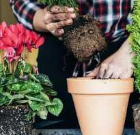 Когда пересаживать цветы