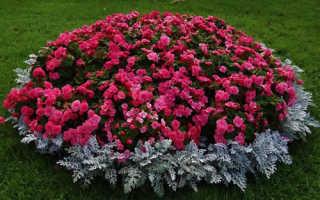 Красные садовые цветы
