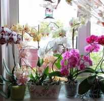 Где должна стоять орхидея
