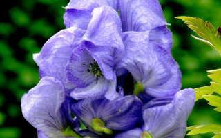 Красивоцветущие многолетние цветы в саду морозоустойчивые