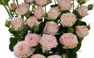 Кремовые розы значение