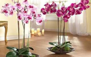 Орхидея отцвела что дальше с ней делать
