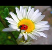 Как ухаживать за самшитом в саду