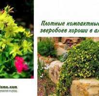 Зверобой декоративный кустарник посадка и уход