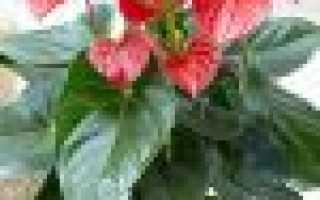 Маленькие цветы