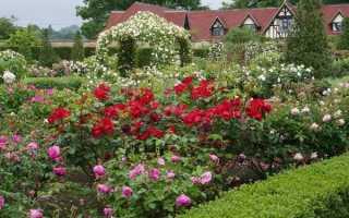 Как красиво посадить розы на даче