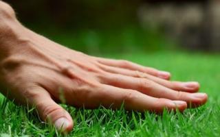 Как правильно засеять газон