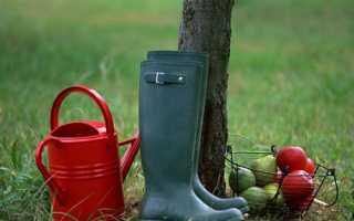 Когда лучше пересадить яблоню весной или осенью