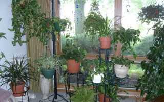 Ядовитые кактусы