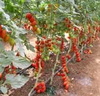 Правильное пасынкование томатов в теплице