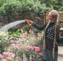 Уход за розами летом