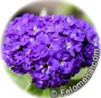 Цветы для рака