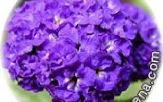 Цветы для близнецов