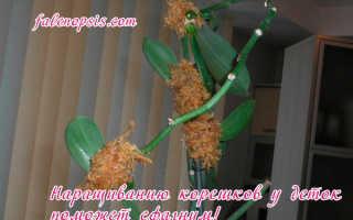 Детки на цветоносе орхидеи фаленопсис