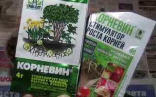 Корневин для орхидей нарастить корни