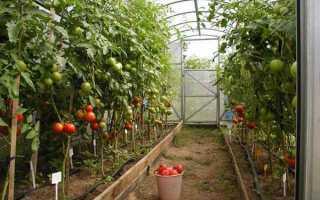 Гроздевые сорта томатов для теплиц