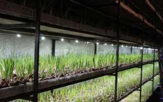 Технология выращивания зелени в теплице круглый год